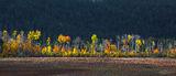 Banff National park, Jasper National park, Alberta, Icefields parkway, Columbia icefields, Moraine Lake, Lake Louise, Fine art...