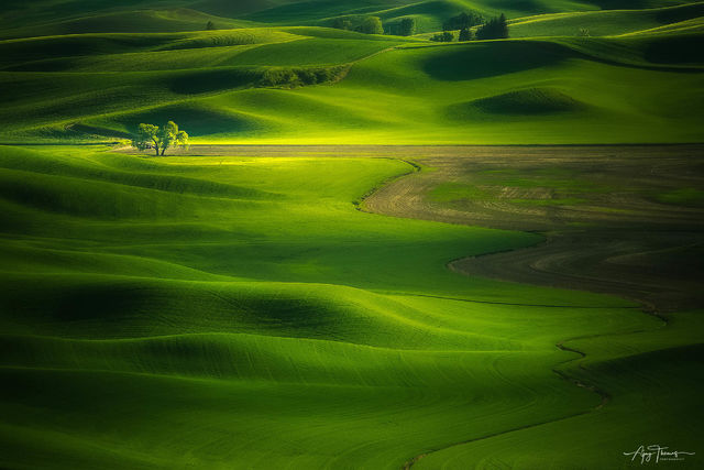 Palouse, Spokane, wall art, Archival fine art prints, Landscape Wall art, Fine art landscape gallery, Wall artVancouver Fine Art Gallery, Vancouver photography gallery, Luxury fine art,Peter Lik Style
