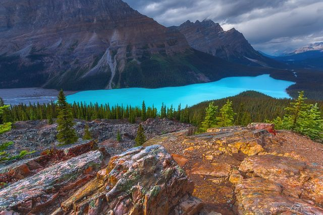 PEYTO DREAM