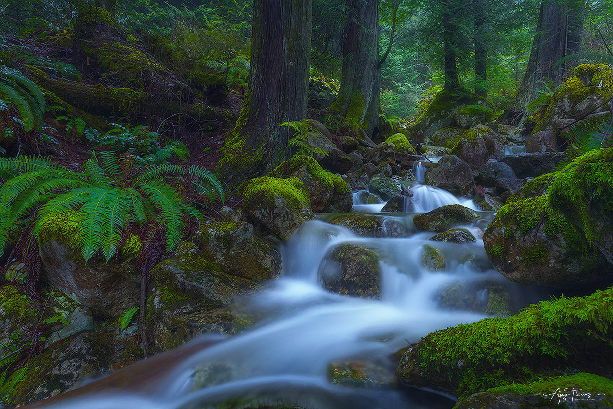 A creek somewhere in the middle of forest in British columbia,Canada
