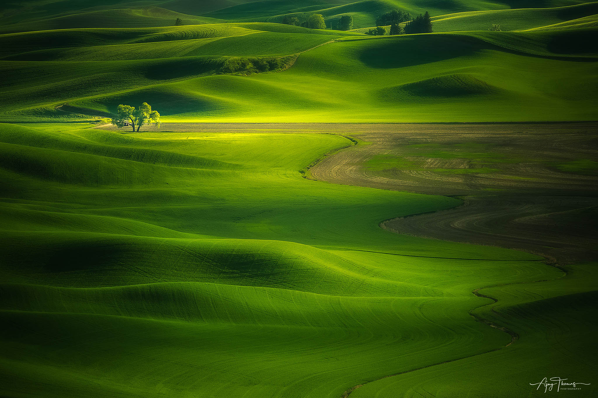 I shot this lone tree at Steptoe Butte state park, and it was worth the 1,000km ride that I took to reach the destination. The...