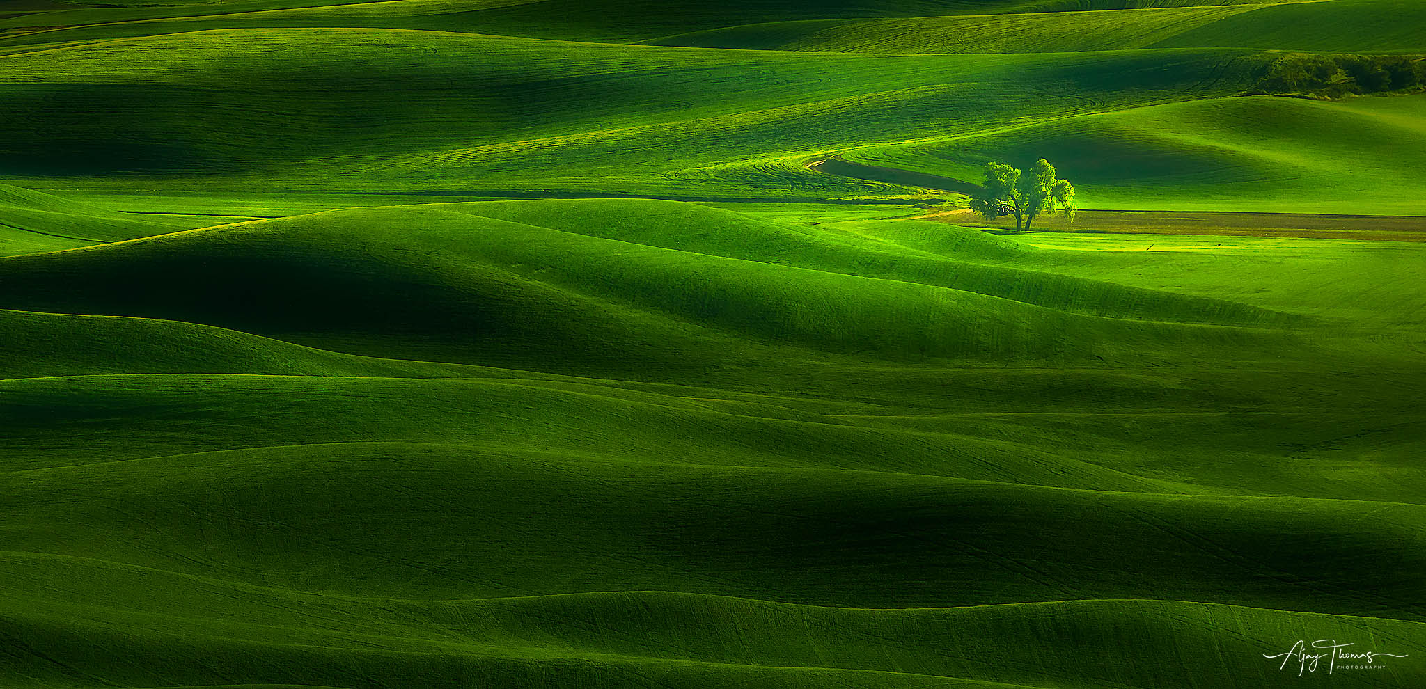 This tree, seen from Steptoe Butte, has been photographed a thousand times. I saw the clouds creating dramatic shadows on the...