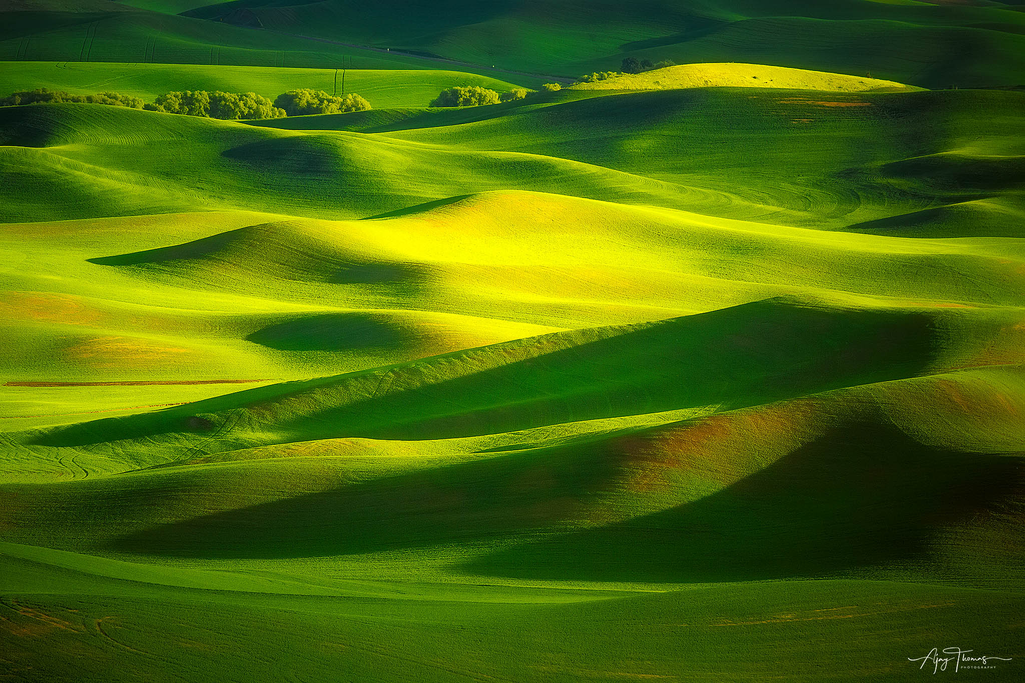 Palouse is an agrarian region in north eastern Washington near Idaho border. It is also home to some of the most productive dry...