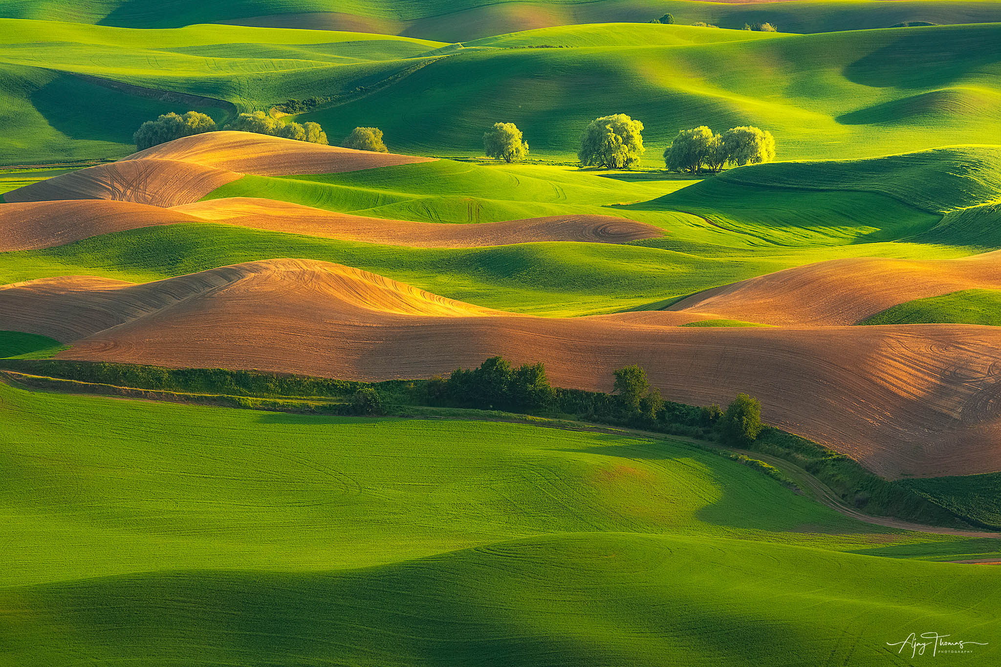 Fine art limited edition print of 100 -Golden sunset illuminates wheat and cottonwood trees over the rolling hills of Palouse...