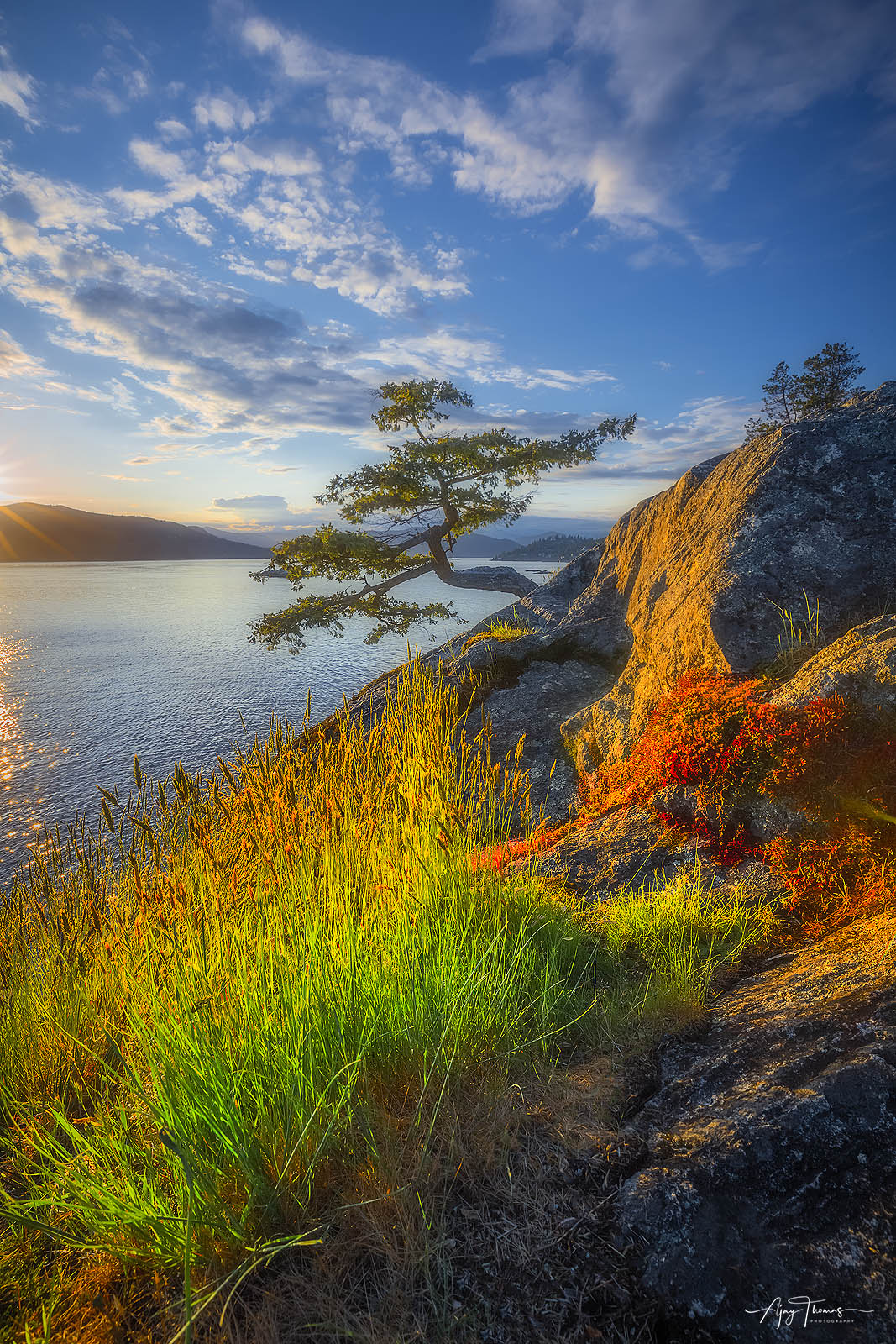 A lone tree at lighthouse park in Vancouver.BC,Canada Fine art limited edition print of 100